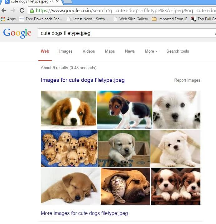 cute dogs filetype jpg